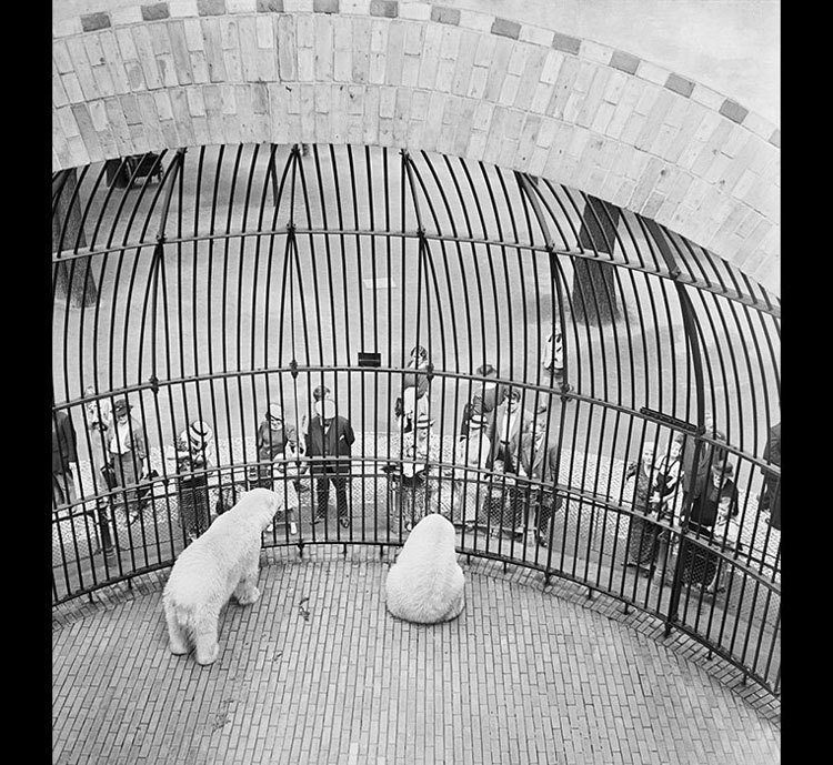 Berlin Zoo 1930s