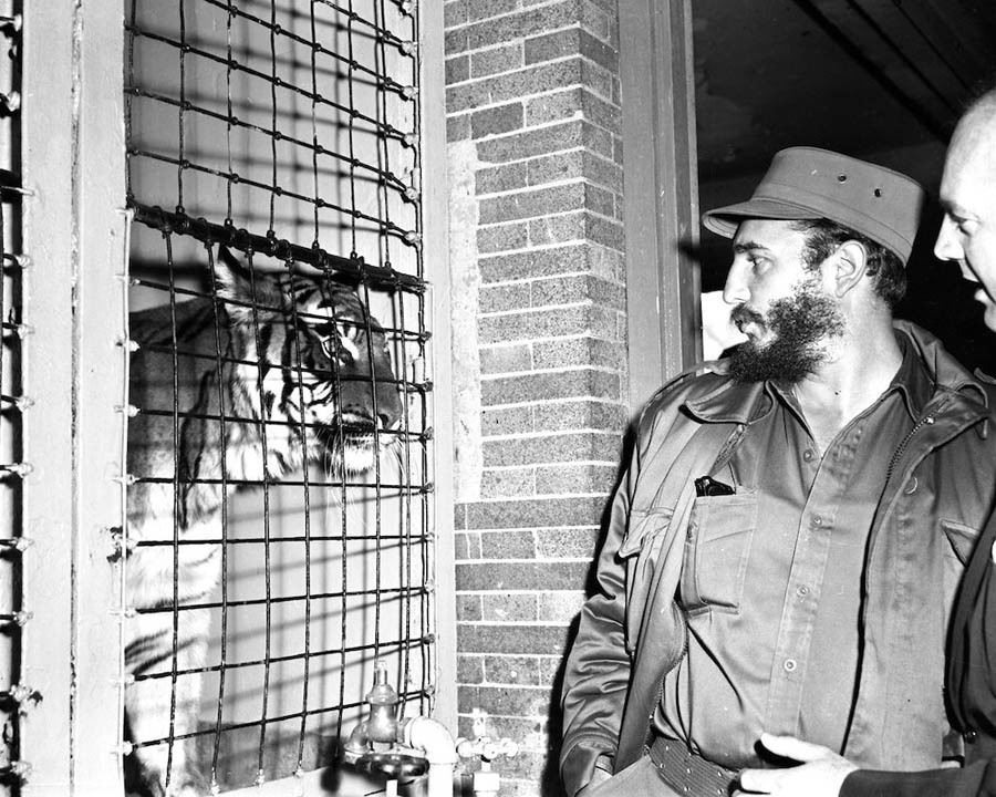 Fidel Castro Tiger