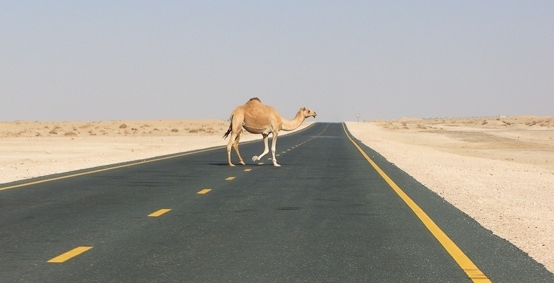 Anti-American Countries Road Camel