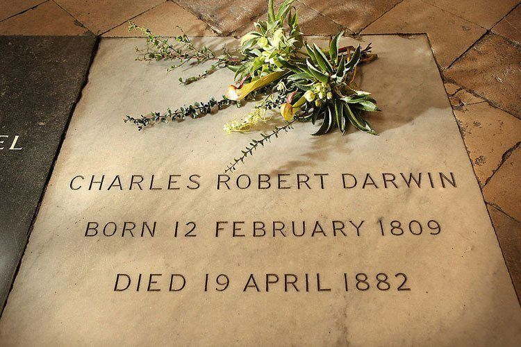 Darwin Grave Wreath