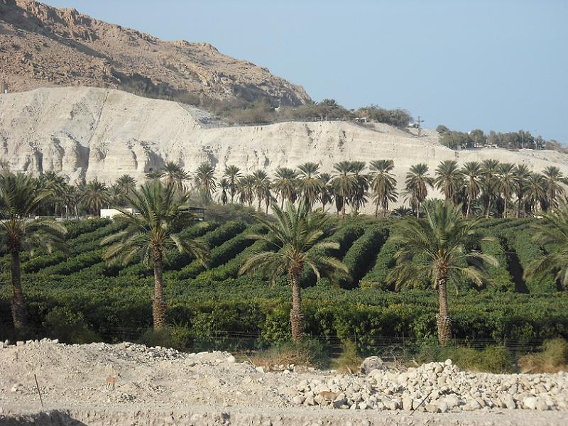 Extreme Climates Gedi Oasis