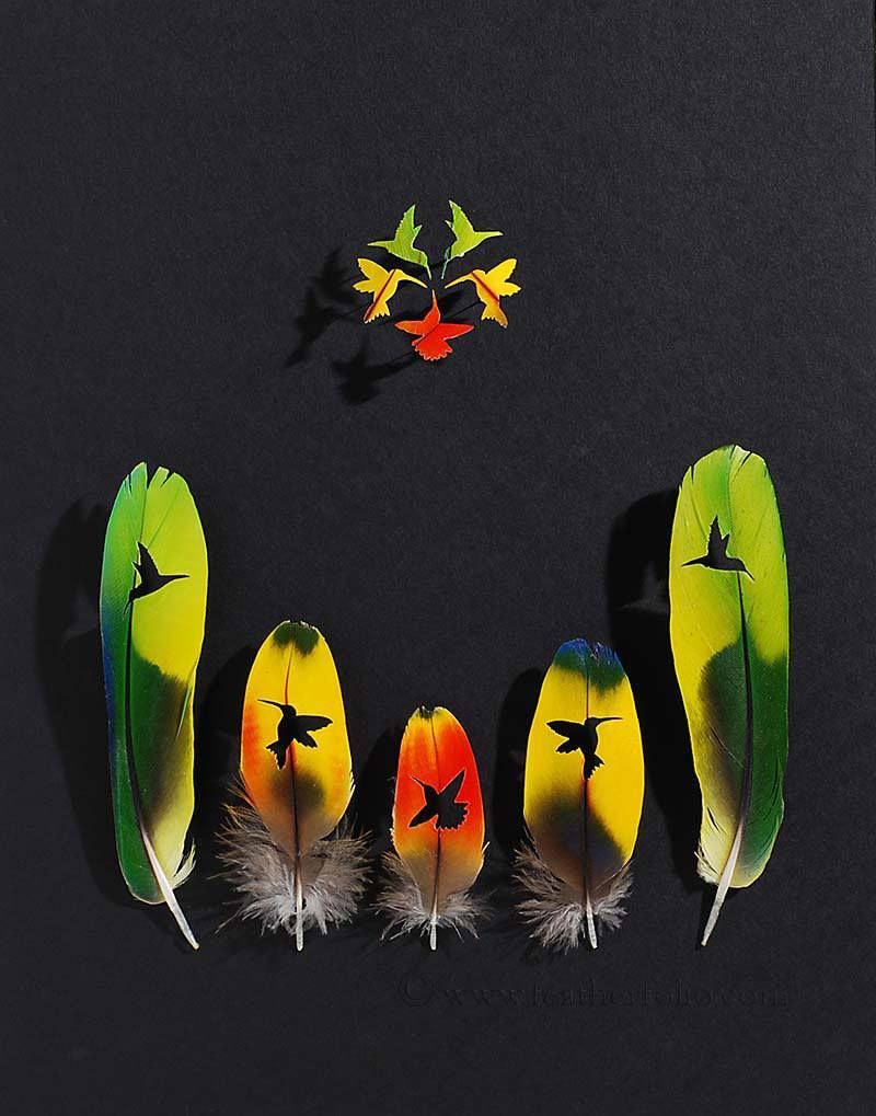Colorful Feather Art
