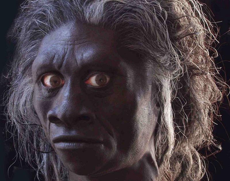 Homo Floresiensis Reconstruction