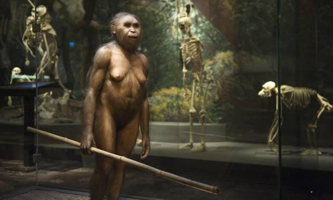Homo Floresiensis Museum