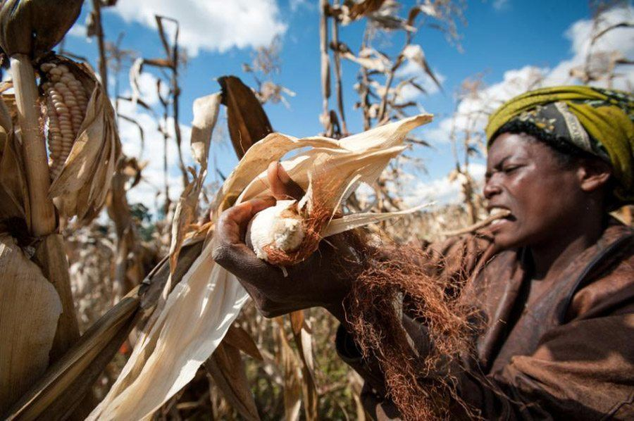 Informal Economy Harvest