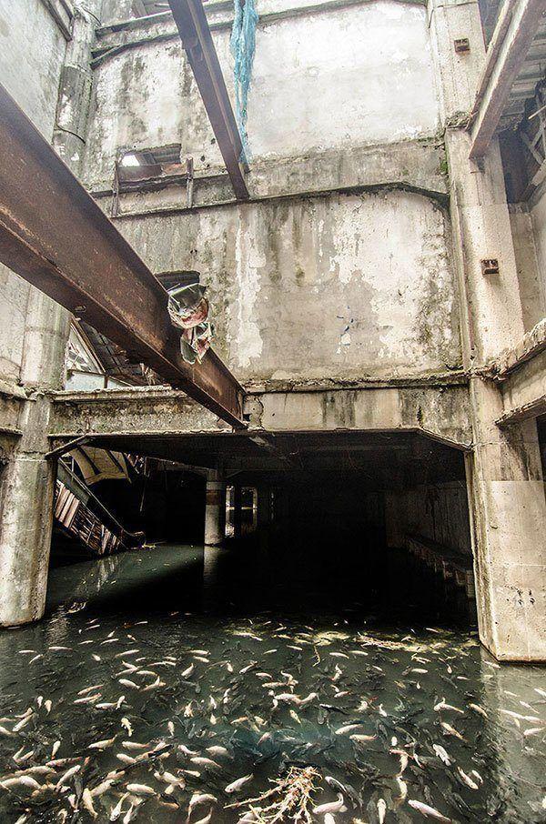 Abandoned Mall Home to Koi