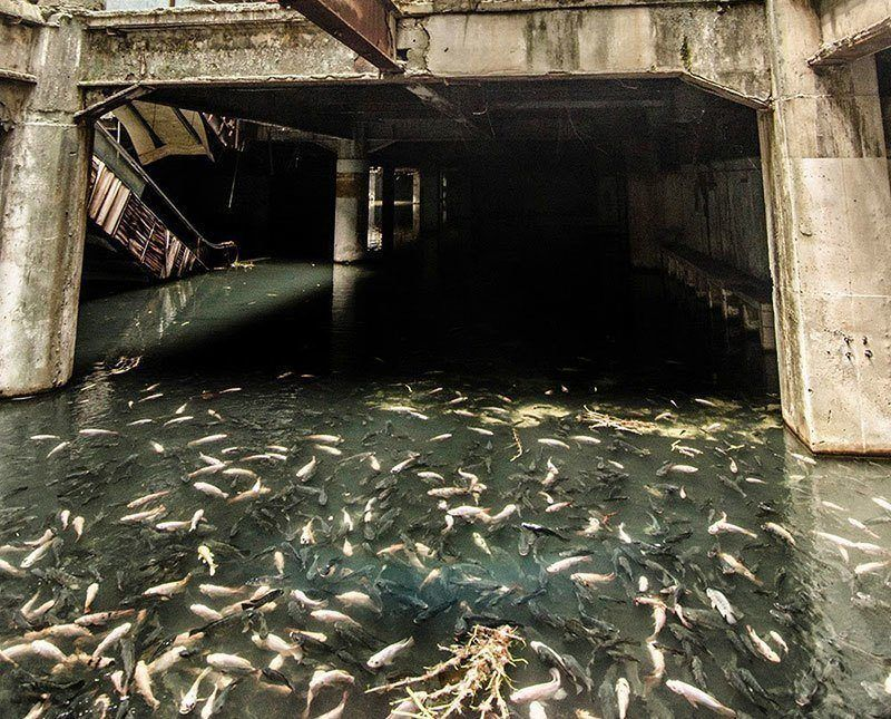 Fish in Abandoned Building