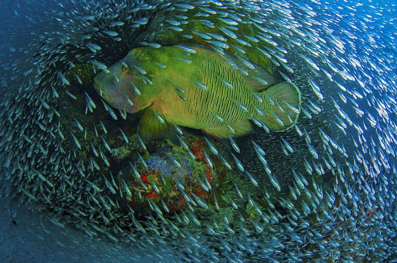 Nat Geo Photo Contest Barrier Reef