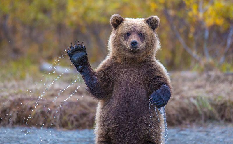 Adorable Bear Nature Photos