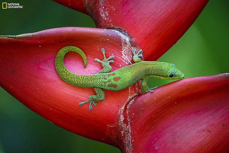 Best Nature Photography of 2014 Gecko