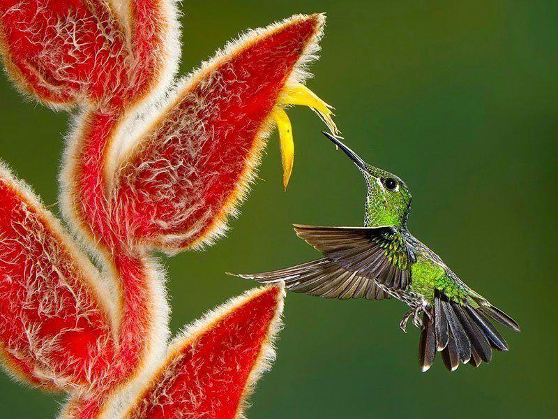 Hummingbird Nature Photography