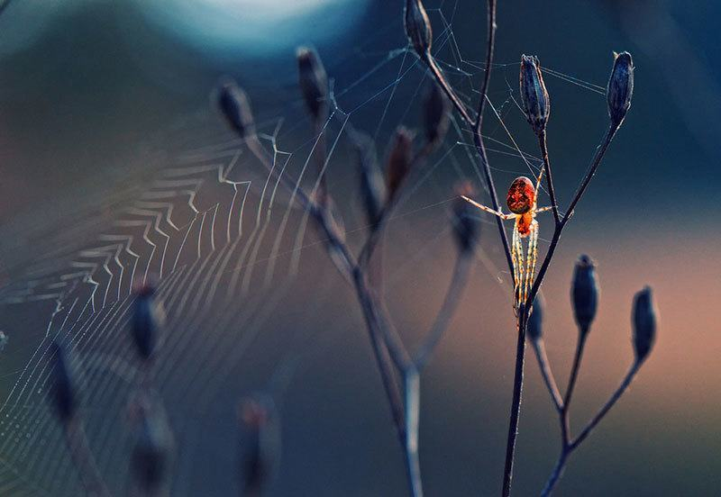Spider by Krasimir Matarov