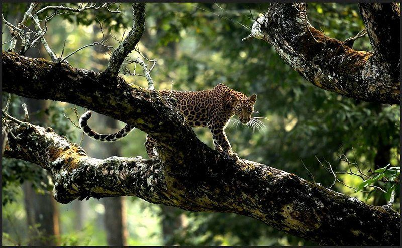 Top Nature Photography of 2014 Leopards