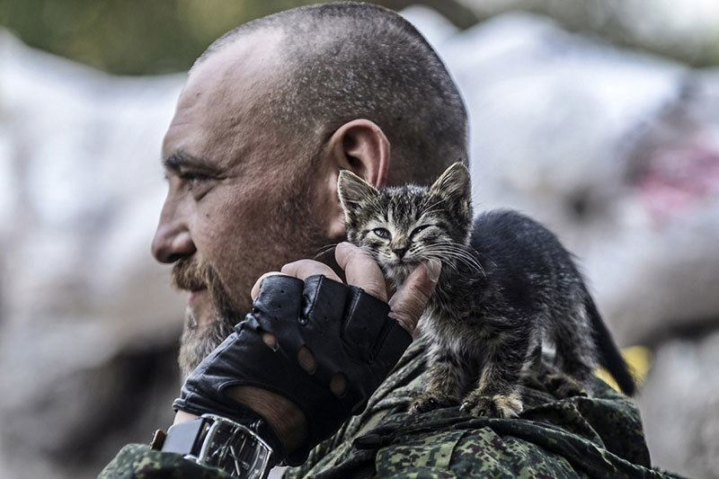 Most Powerful Photos of 2014 Kitten and Soldier