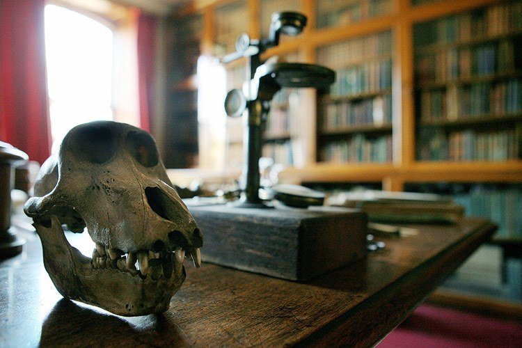 Skull Microscope