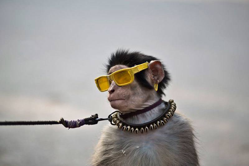 Pakistan Performing Monkey