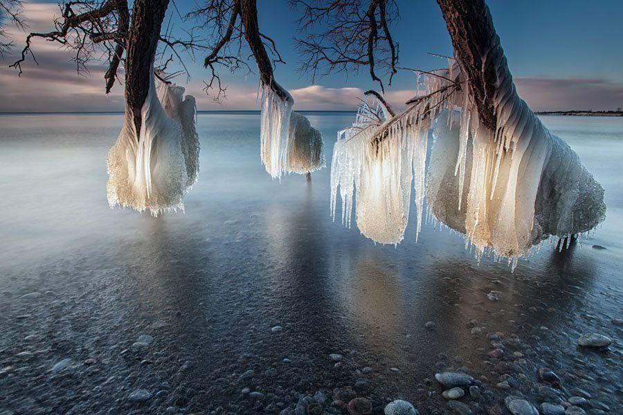 Timothy Corbin Icy Tree
