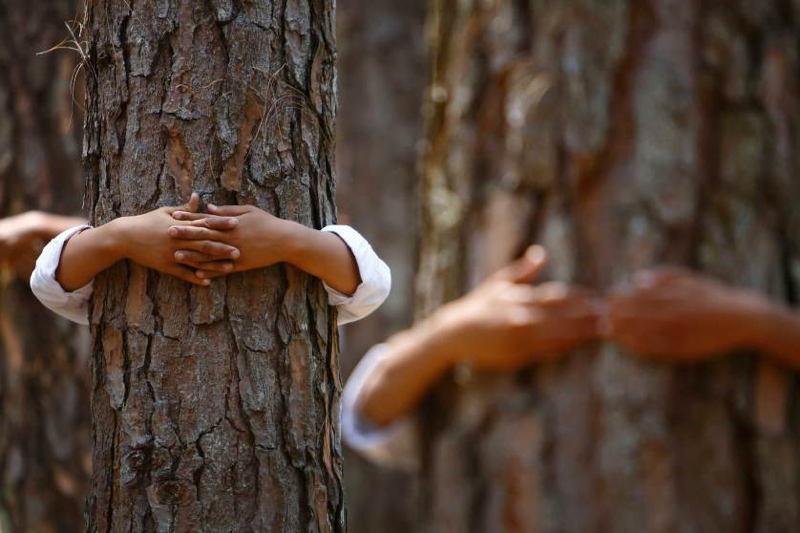 Uplifting Photos Tree Hugging