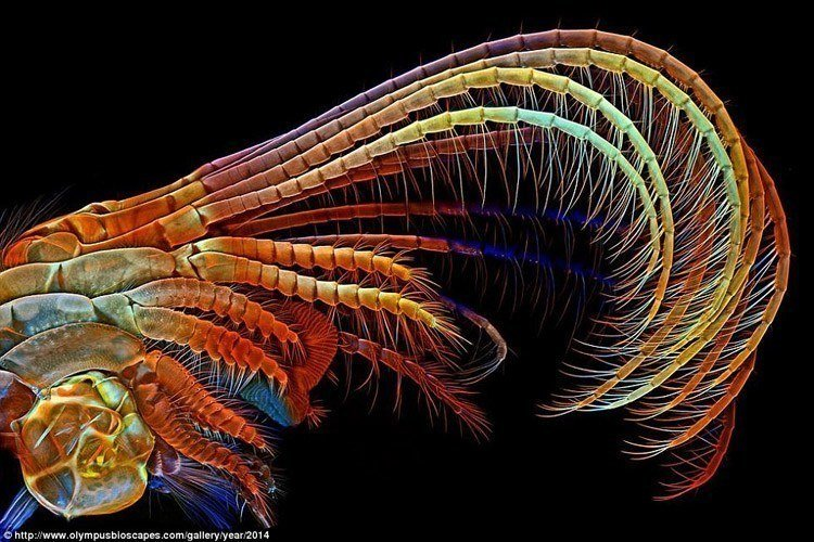 Microscopic Nature: Winners Of The 2014 Olympus Bioscapes Competition