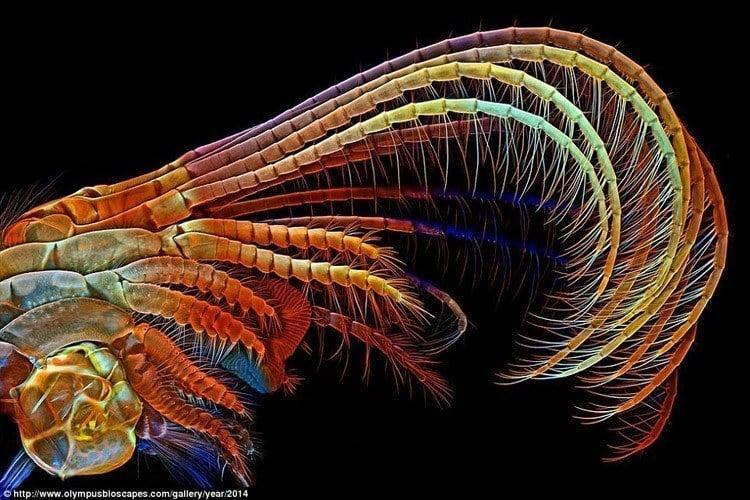 Microscopic Photography Barnacle
