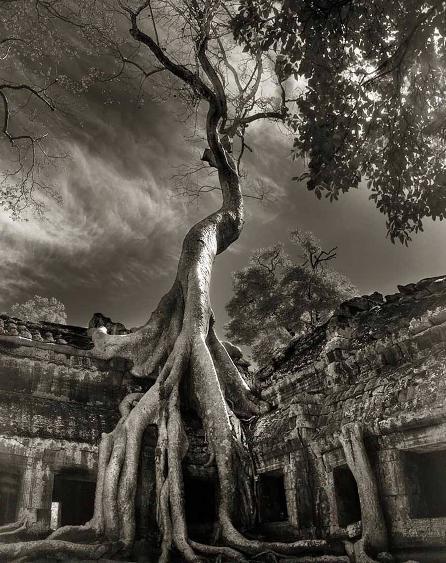 Ancient Trees Rilkes Bayon