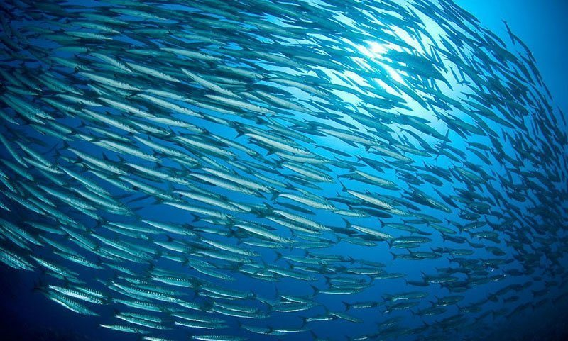 Awesome Schooling Fish