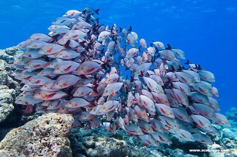 Diving School of Fish