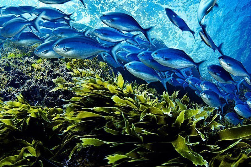 Schooling Fish in Motion