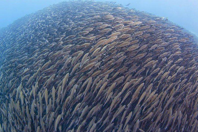 Incredible School of Fish