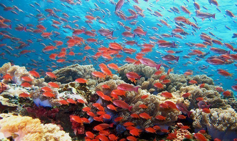 Red Schooling Fish