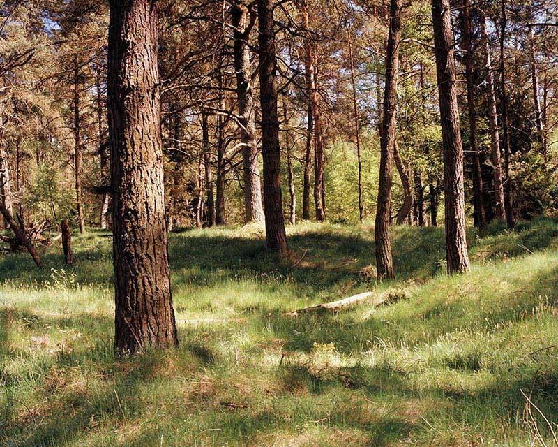 German Sniper Forest