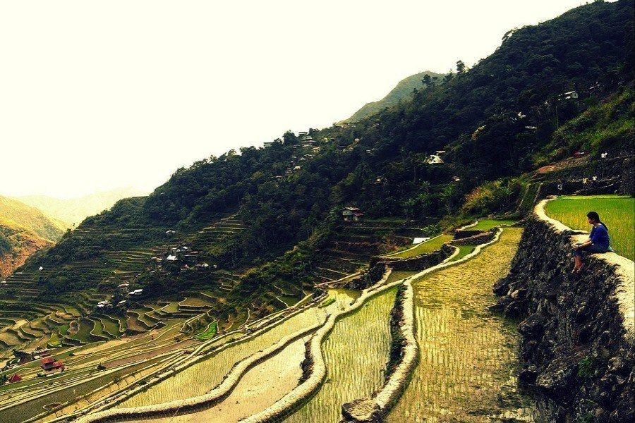 Rice Terraces Batad Lines