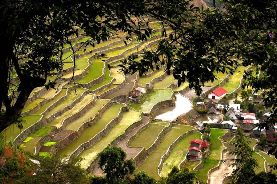 Rice Terraces Batad