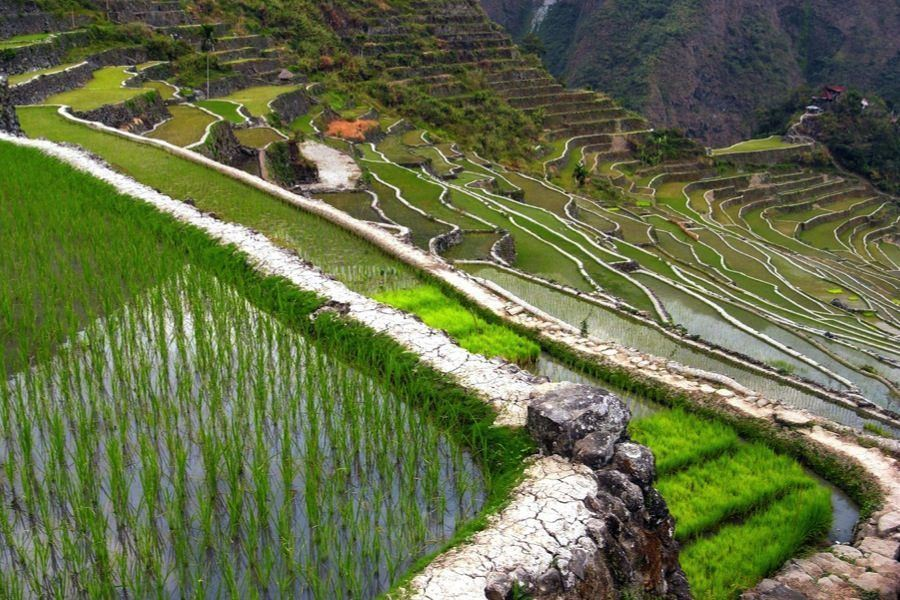 Rice Terraces Batad Side