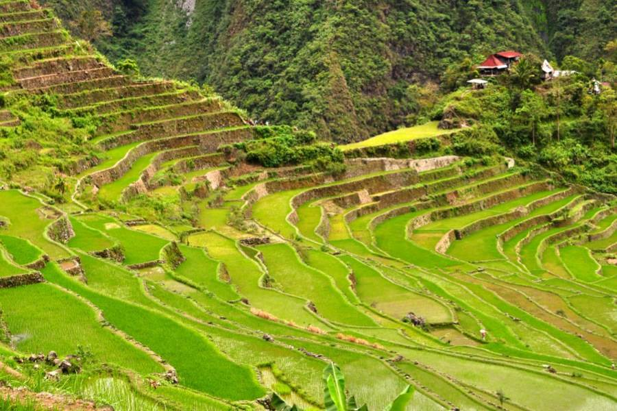 Rice Terraces Steps