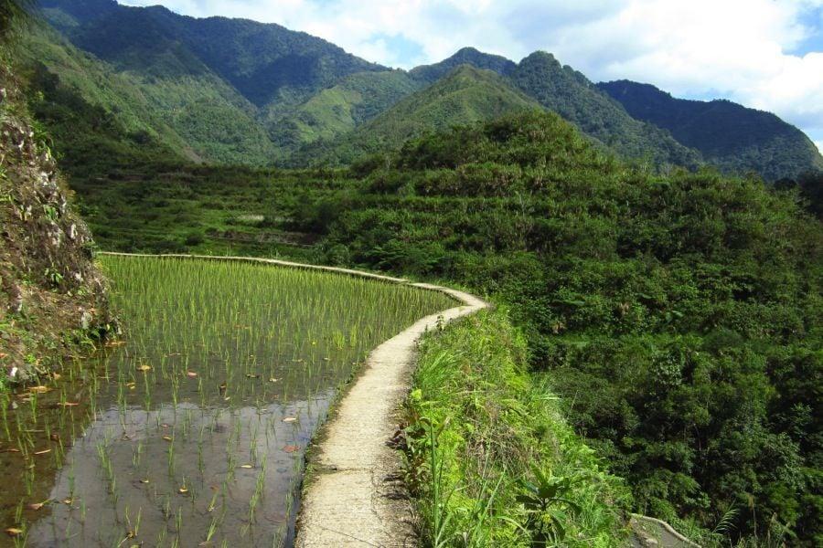 Rice Terraces Mountainside