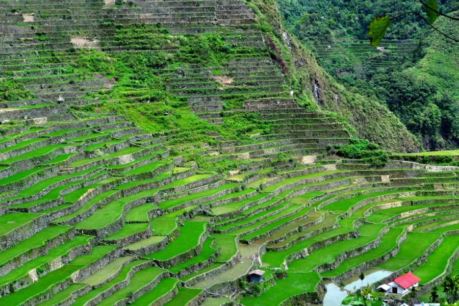 Rice Terraces Amphitehater