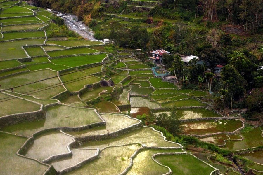 Rice Terraces Hungduan