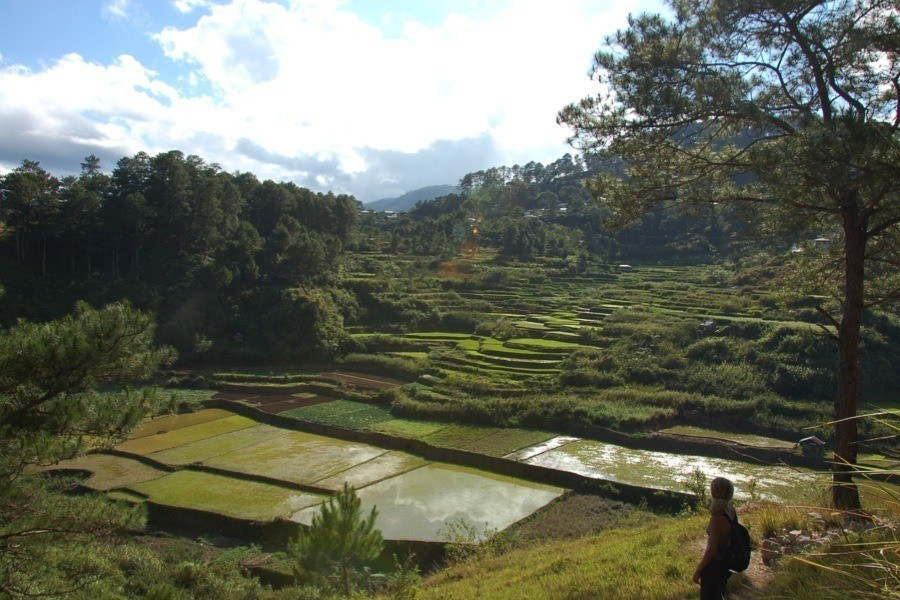 Rice Terraces HIkers
