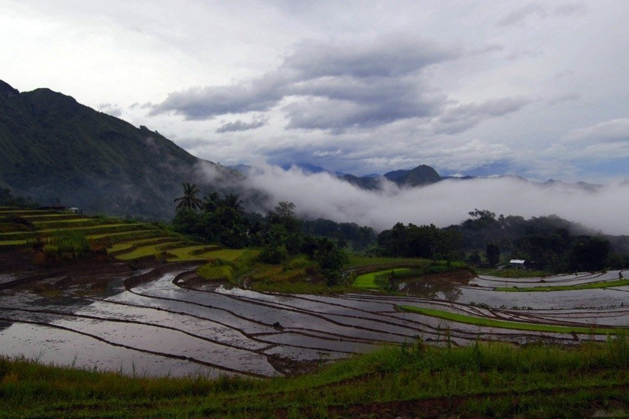 Rice Terraces Low Clouds