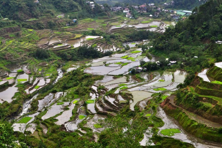 Rice Terraces Puzzle