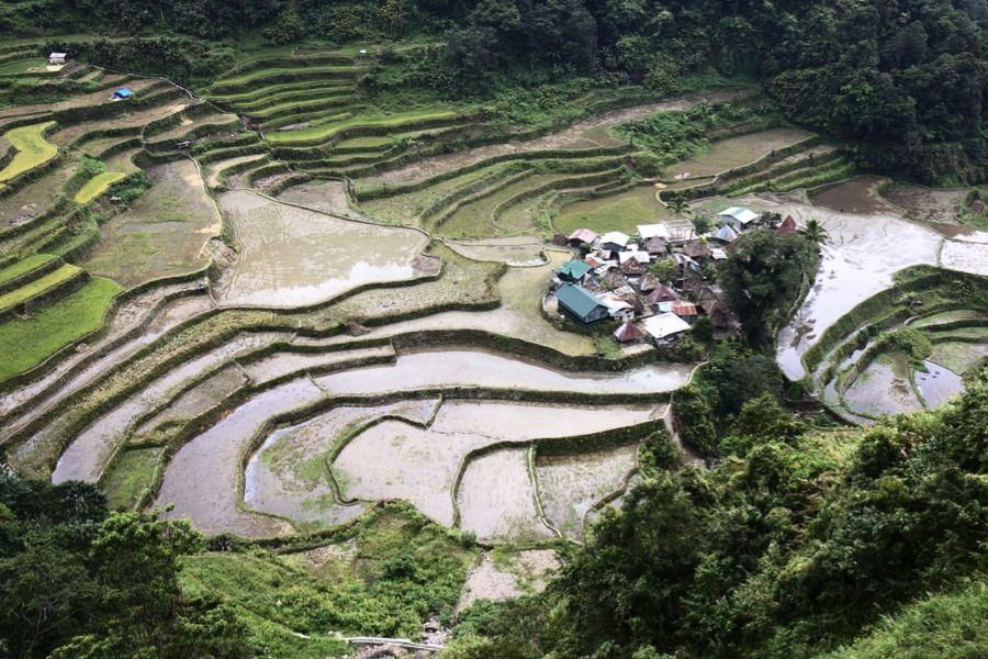 Rice Terraces Steps