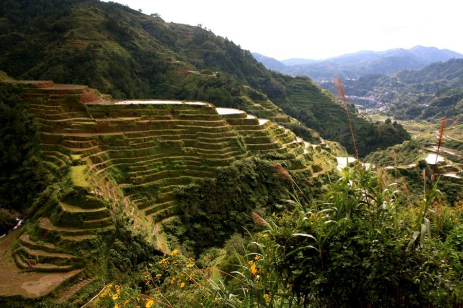 Photographs of Rice Terraces