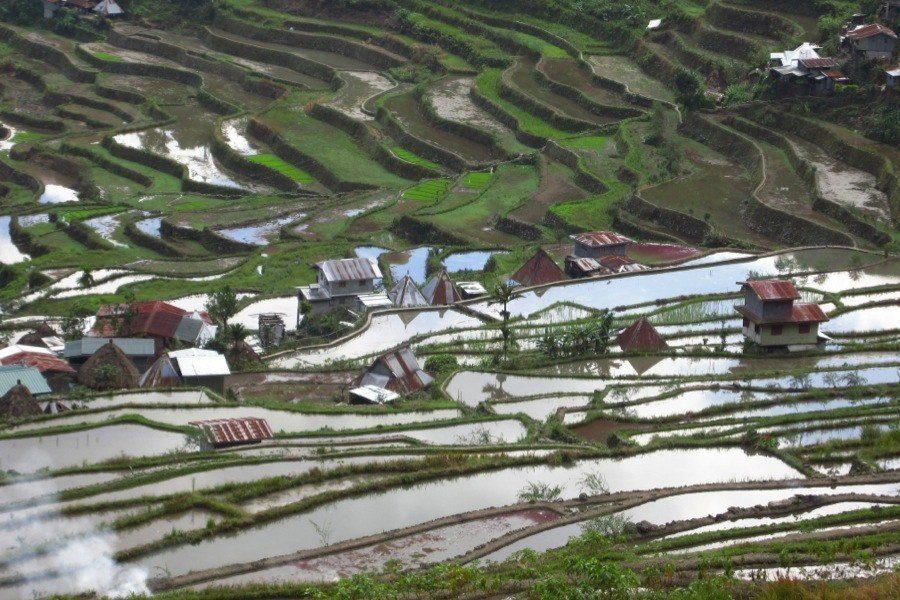 Rice Terraces Paradise