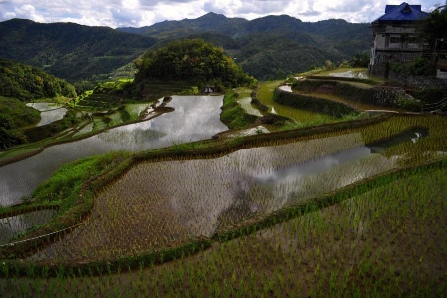 Rice Terraces Close Up