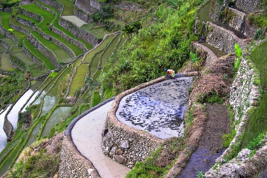 Rice Terraces Stone Walls