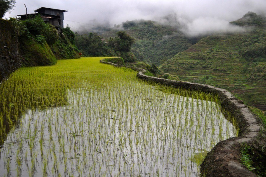 Rice Terraces Techniques