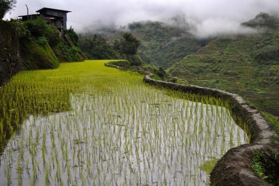 Rice Terraces Techniques