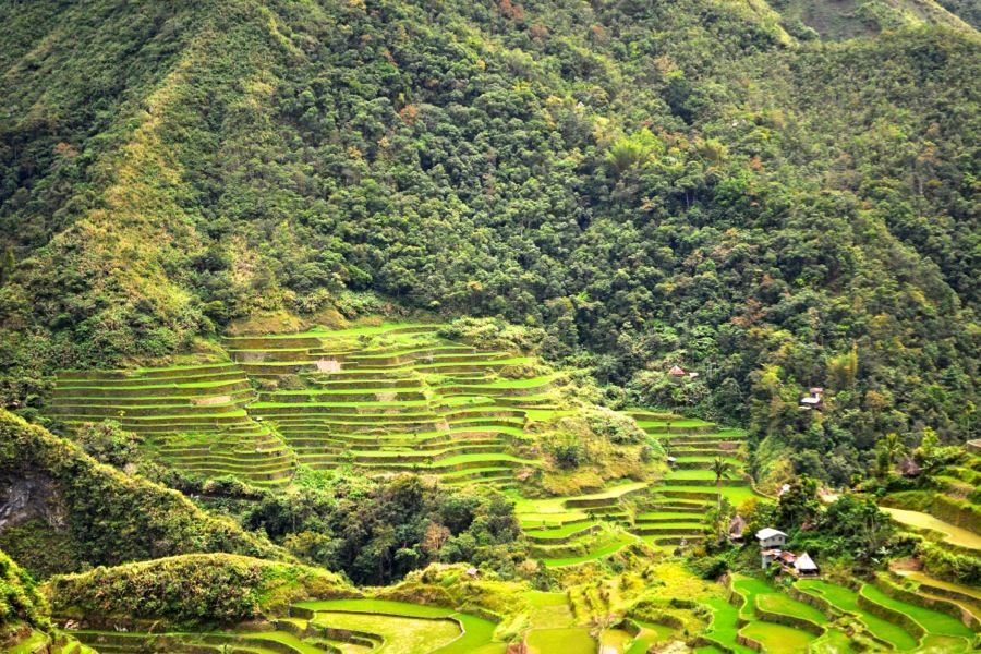 Rice Terraces Trekking
