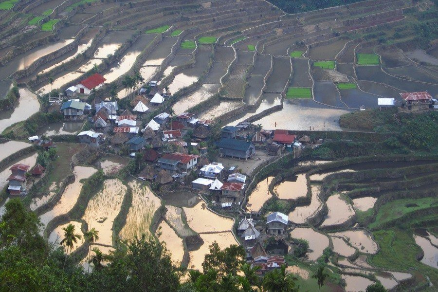 Rice Terraces Colored Village